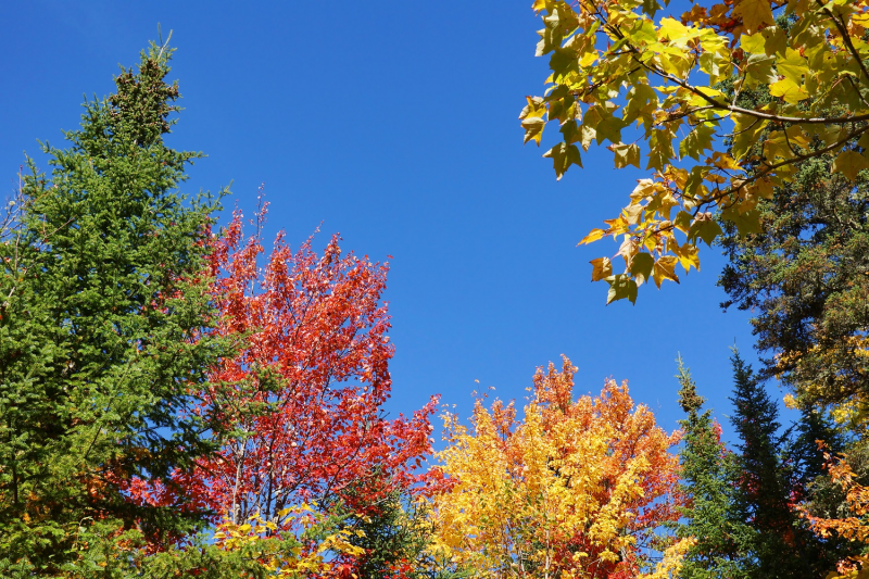 November's plants of the month are trees