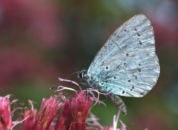 Creating your own Butterfly garden