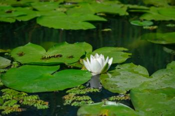 Guide to keeping your pond in good condition
